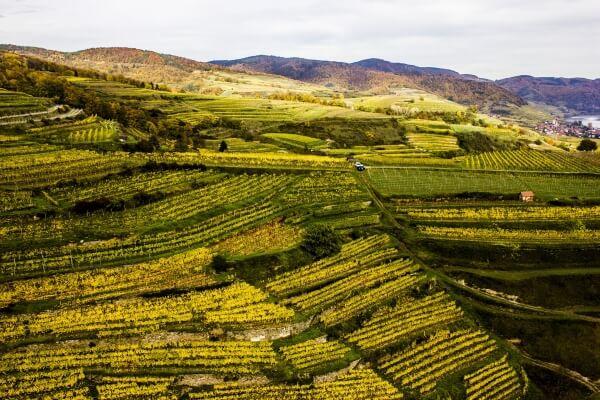 Vinice Kollmütz vinařství Machherndl