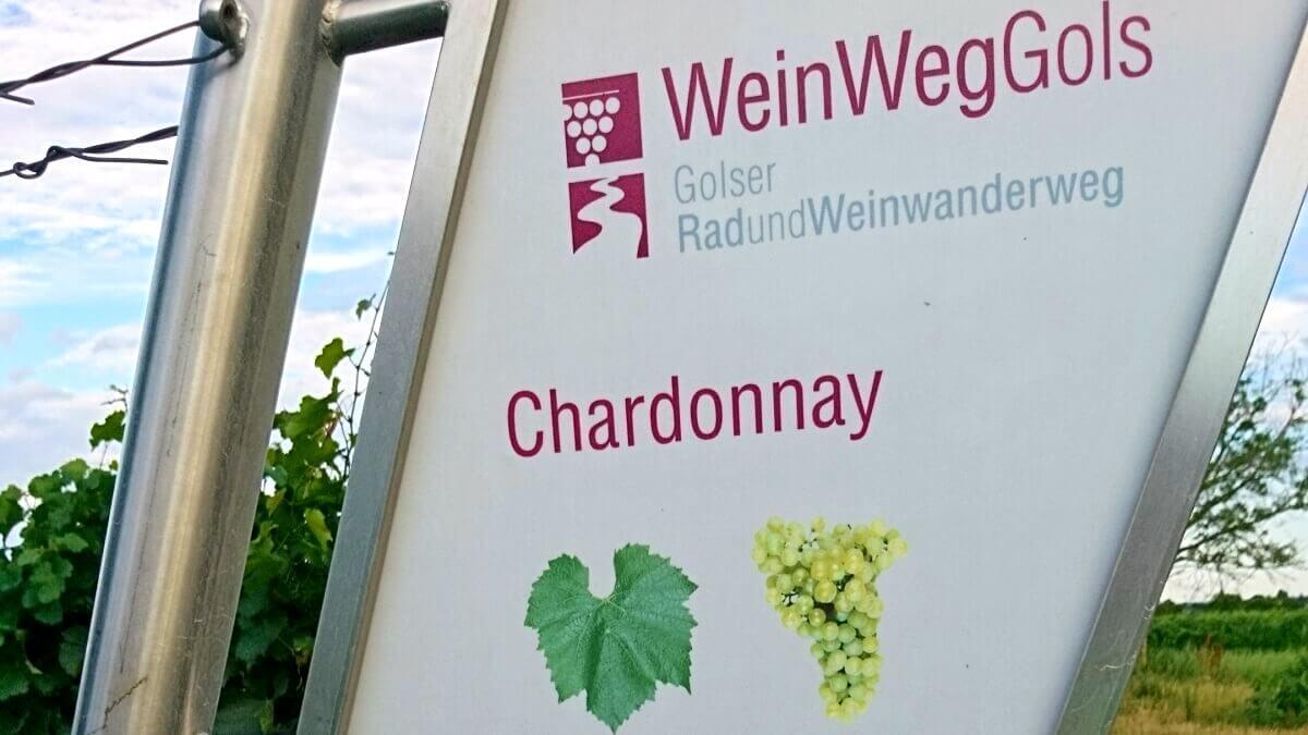 Edukativní vinice v Golsu - odrůda Chardonnay