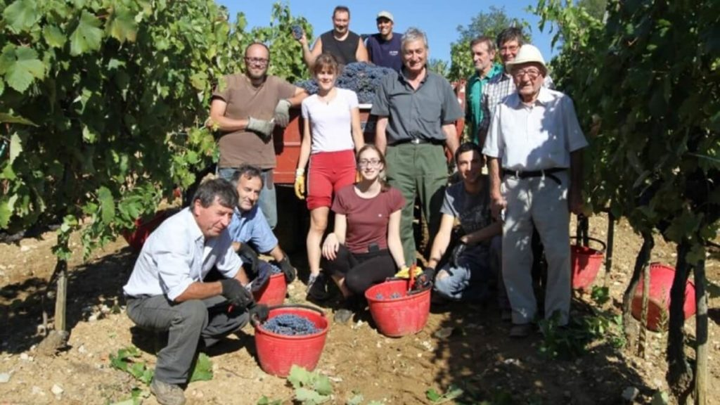 Agricola Losi - sklizeň