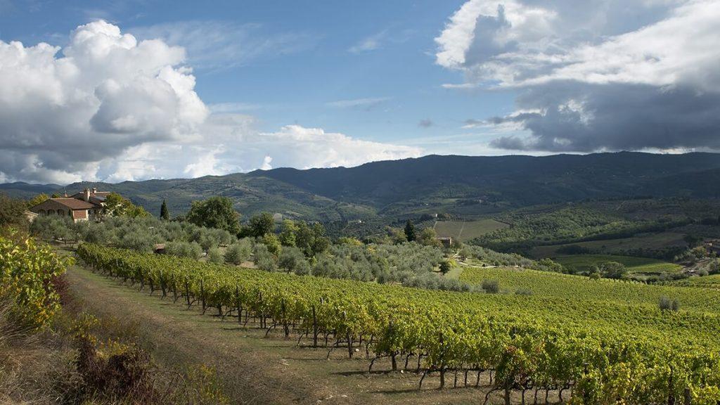 Le Cinciole - vinařství