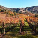 Vinice v údolí Napa v Kalifornii