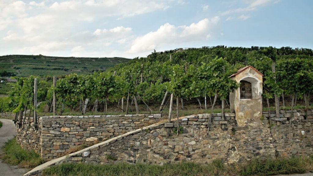 Vinice Steinriegl vinařství Schmelz