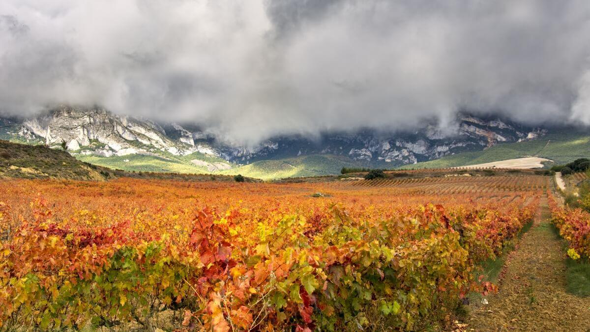 Rioja - vinice a krajina
