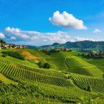 Vinice v Piedmontu
